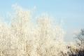 Мороз по верхушкам деревьев
